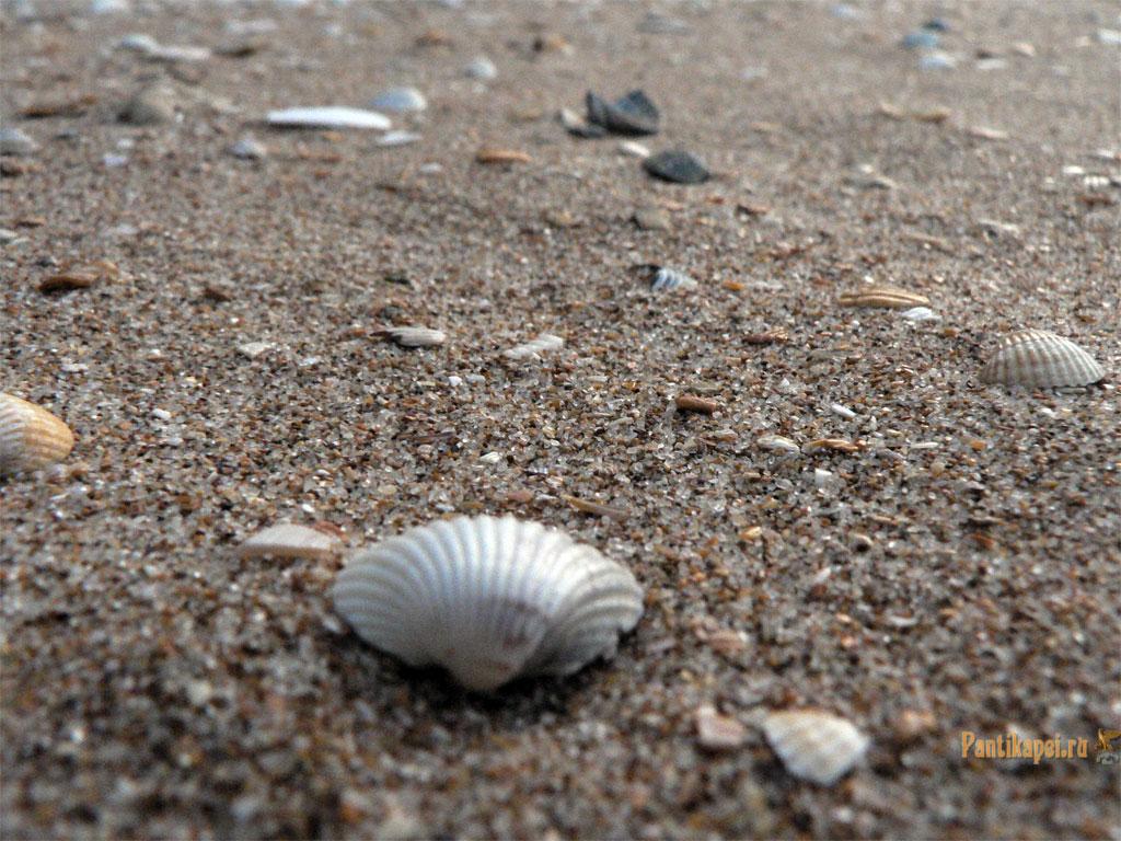 gen-plazh2007-60