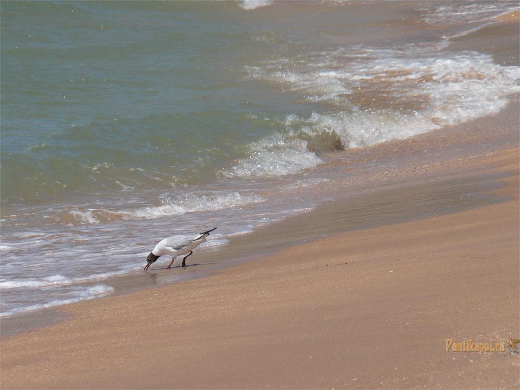gen-plazh2007-19