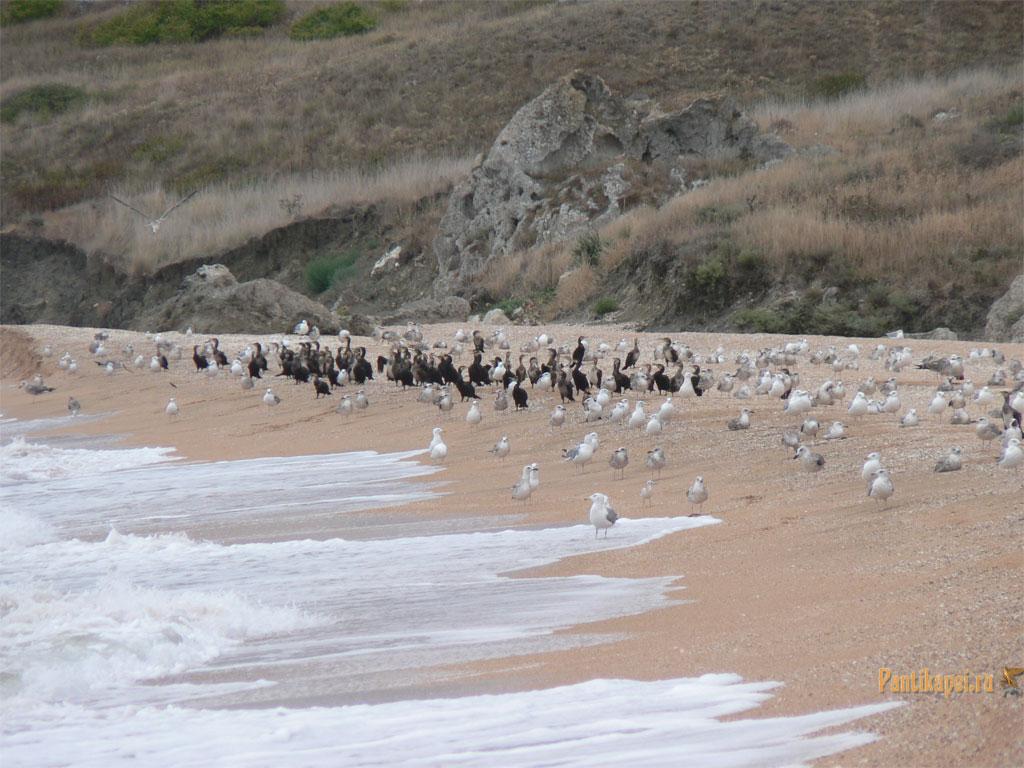 gen-plazh2007-27
