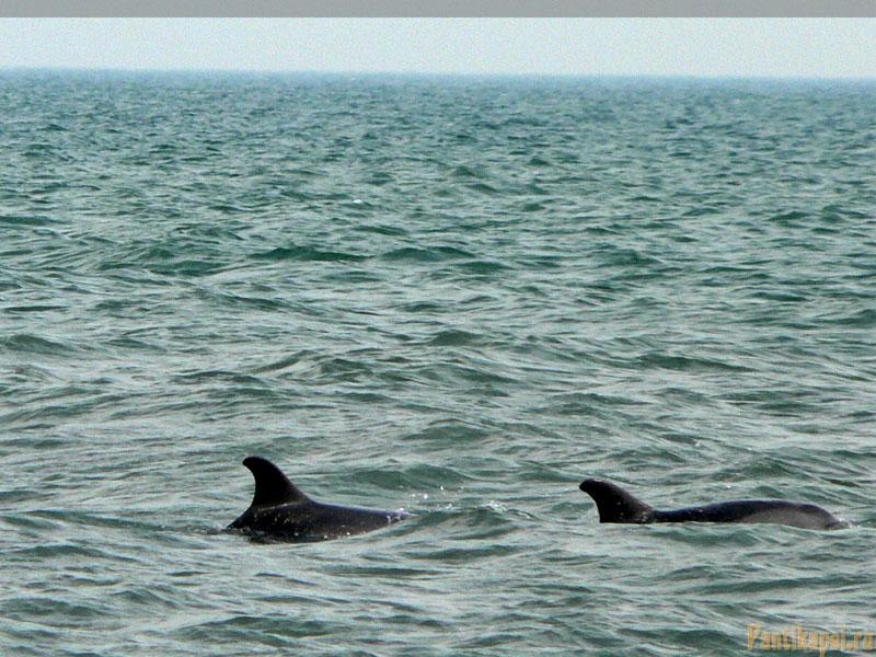 Дельфины в Героевке