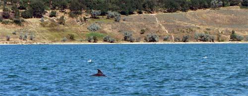 Дельфин у берега