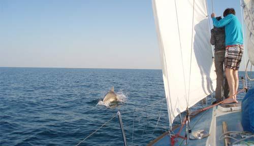в керченском проливе сопровождение дельфинов