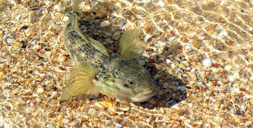 рыбалка на азовском море, Курортное