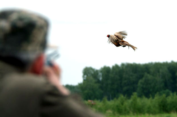 Охота на фазана в Крыму