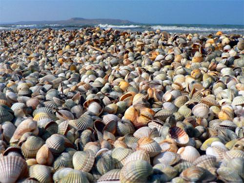 Азовское море, ракушки