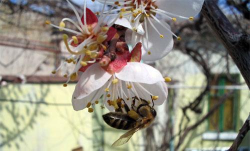 Мои пчелы