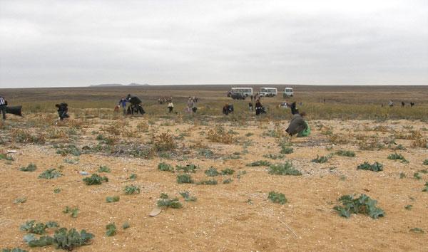Уборка заповедника Опук, октябрь 2011