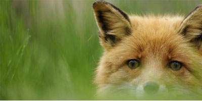 Охота на лис в Крыму