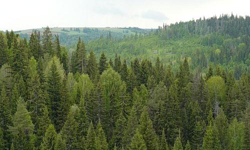 Марийский лес