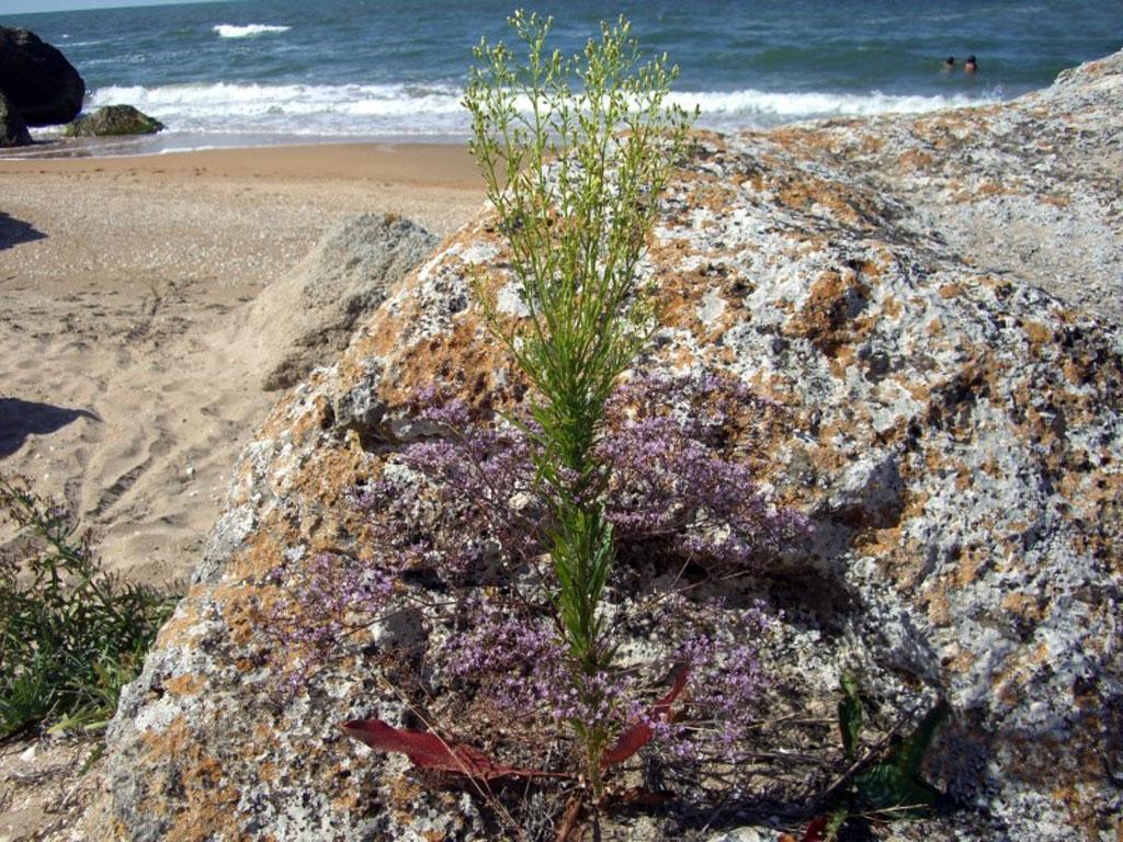 Пляж в Песочном, Восточный Крым, Азовское море