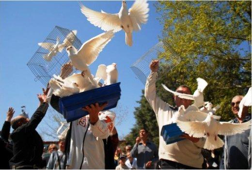 Севастополь выставка голубей 5 мая 2012
