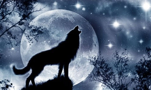 Волки в Крыму - в последний раз появлялись в 1972 году
