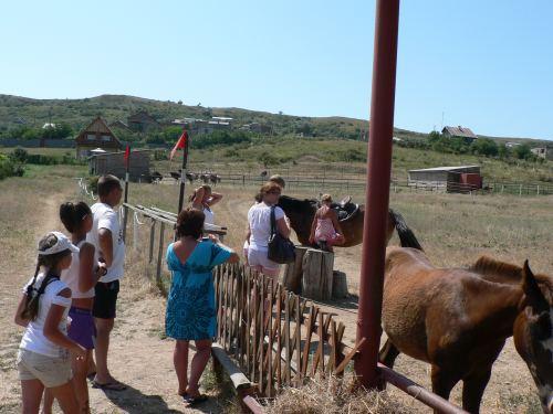 Страусовая ферма Экзотик в Керчи, покататься на лошадках