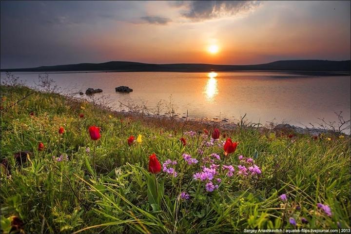 Dikie-tyulpany-v-Krymu