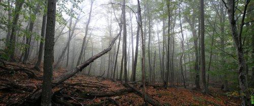 Буковый лес. Крым. Автор Владимир Клюев